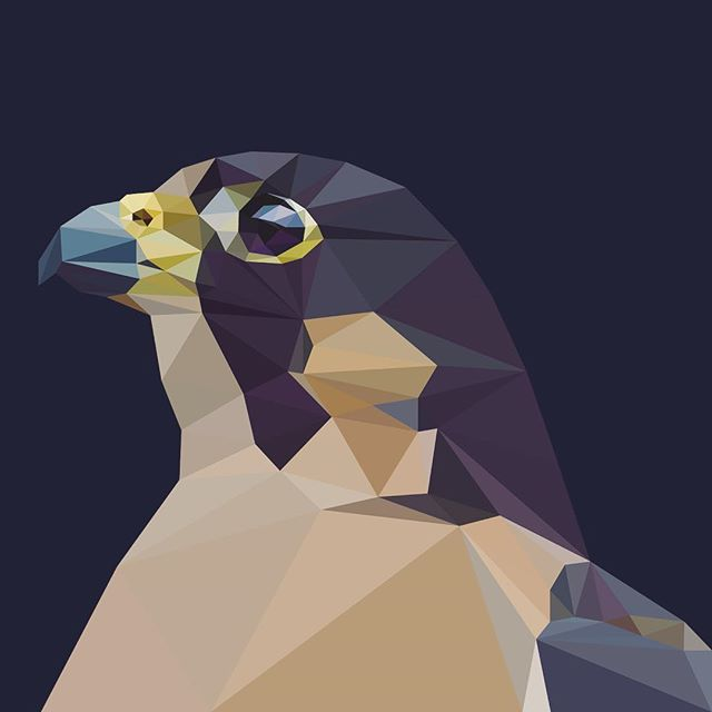 Falcon - #graphicdesign #vector #lowpoly
