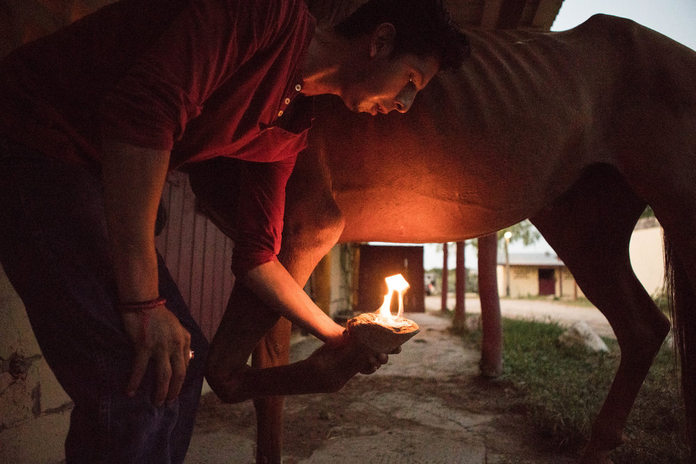 3 August 2016, San Antonio, TX – Luis Parra Villanueva lights a flame on Bloodbuzz's hoof to clean it of Horse's Hoof Fungus. (Copyright Bonnie Arbittier)