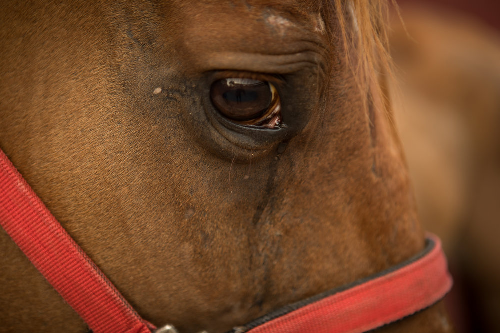 23 July 2016, San Antonio, TX – Bloodbuzz's eyes are full of emotion after being saved from death in Houston, Texas, and brought to Rancho del Charro. (Copyright Bonnie Arbittier)