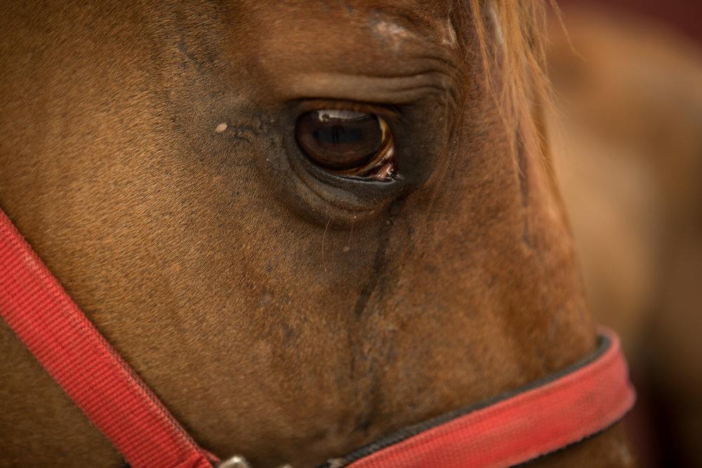 BonnieArbittier_horse_project_luis_ranch_health-2.jpg