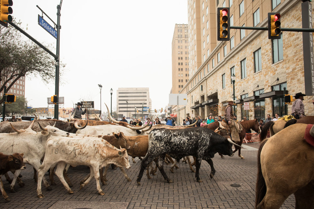 BonnieArbittier_western_heritage_parade_cattle_drive_longhorn_cow_horse_horses_downtown_rodeo_animal_lifestock_2-2-2019-19.jpg