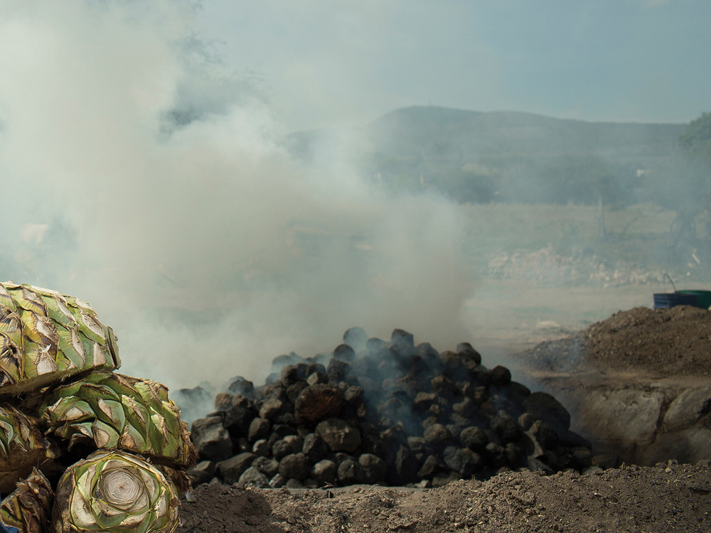 COCCIÓN Las piñas se cuecen alrededor de 4 días en un horno de tierra, calentado con leña y cubierto con piedras y hojas de agave.