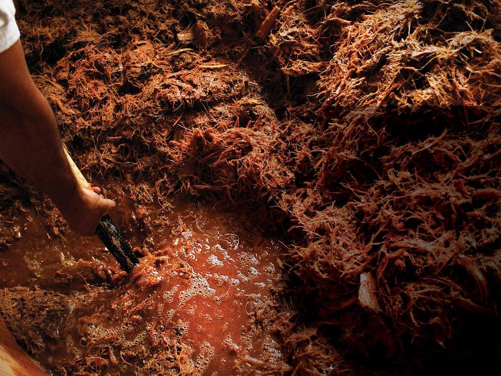 FERMENTACIÓN La pulpa reposa en tinas de madera de encino y se dejan fermentar de 3 a 15 días, dependiendo del clima.