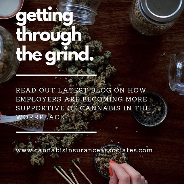 What to know what's happening with  employers and stance on cannabis usage? Read about it and other industry news on our site. Link in bio. #grind #grinding #cannabis #cannabisintheworkplace #cannabisinsurance