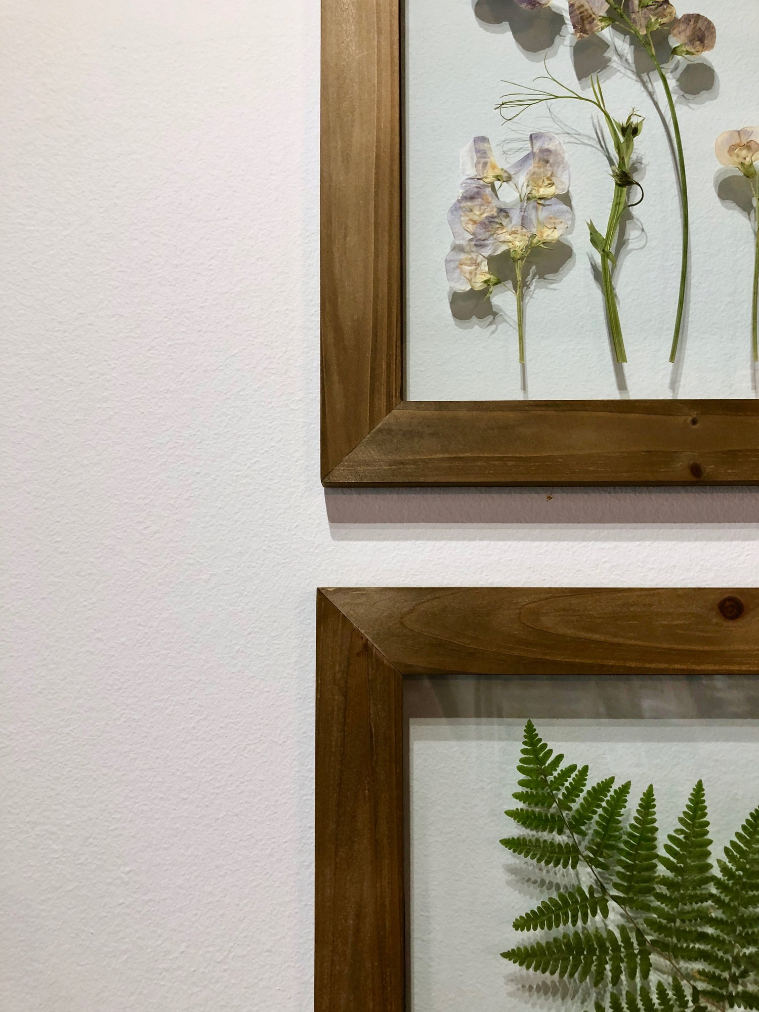 Pressed botanicals from Washington State.  Available in 8x10 and 12x12 in rustic wood or black frames.  {From $96.00}
