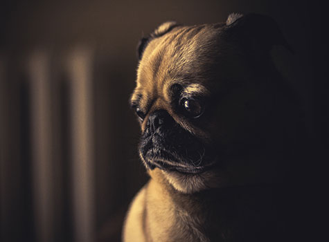 Your website made this cute doggy sad. How could you?