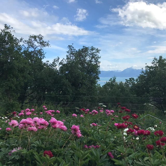 Scenic Place Peonies' farm sits high above downtown Homer overlooking Kachemak Bay with the most incredible, breathtaking view of mountains and glaciers.