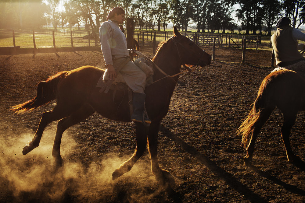 Gaucho Jose Luis Semorile trains a young quarter horse on Estancia La Argentina.