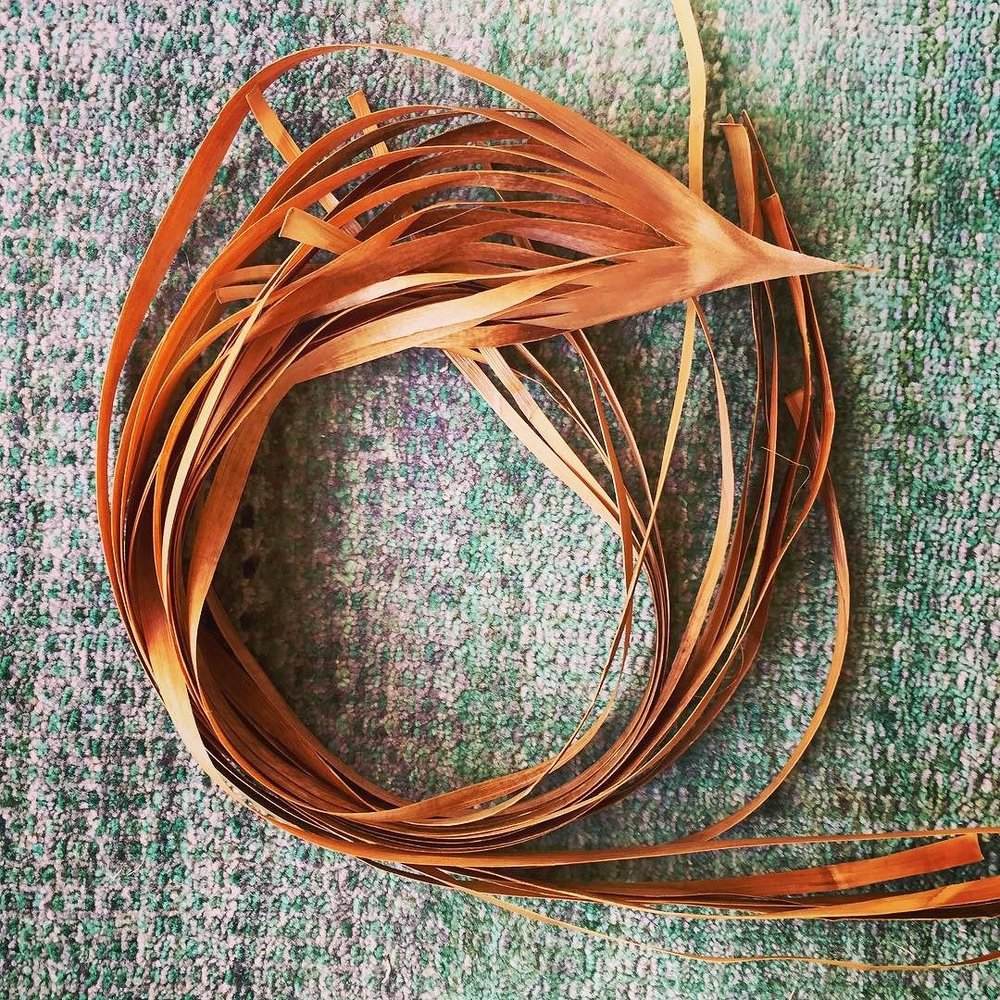 _bangalowpalm_spathe_ribbons.jpg