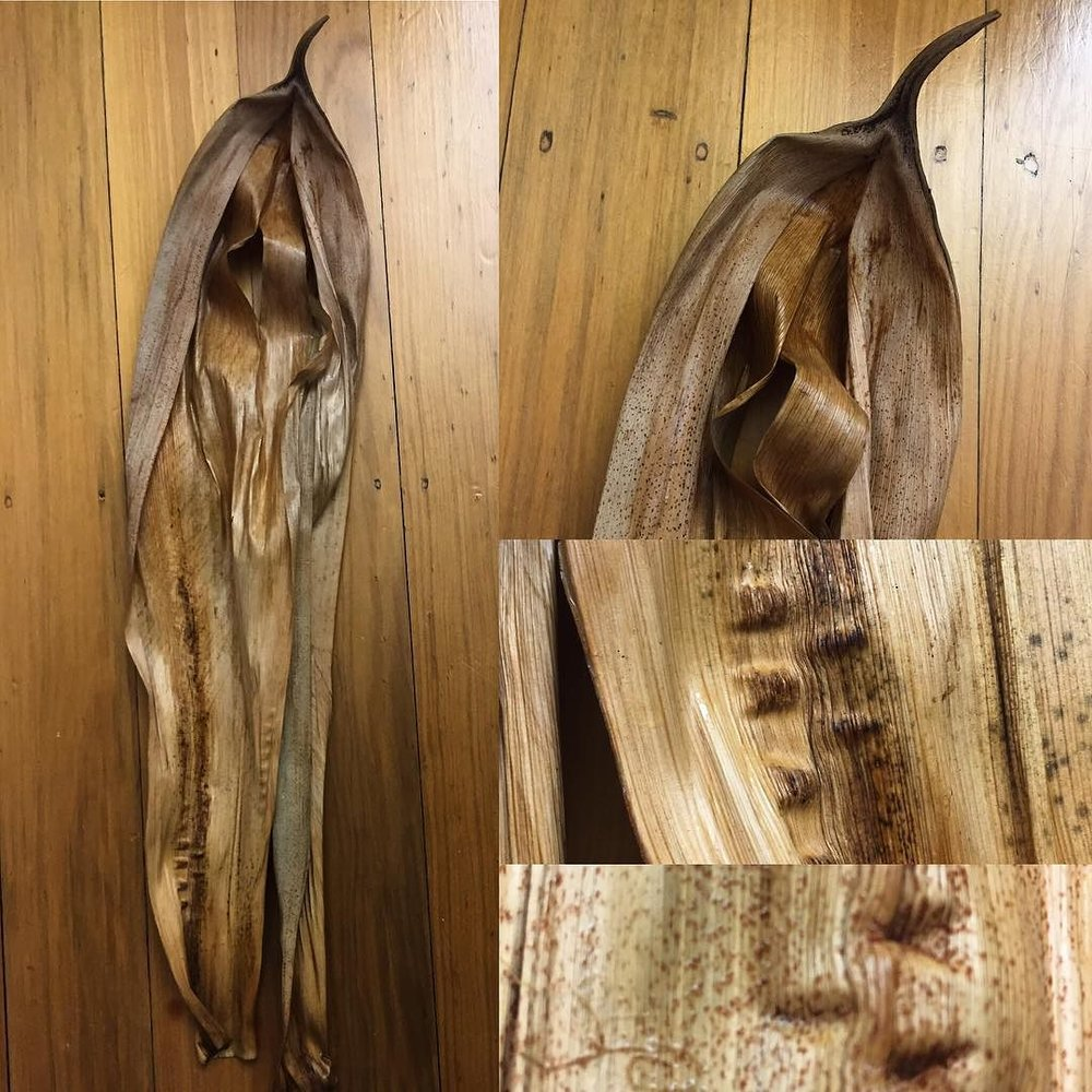 best_weaving_material__bangalowpalmspathe__looselywovensydneysuburbanfinds.jpg