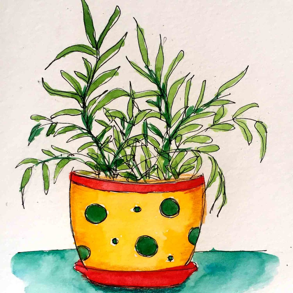 Apr 16 Plants in Pots