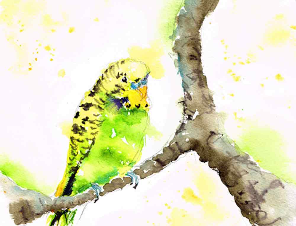 Budgie-little-bird-no-11-kw.jpg