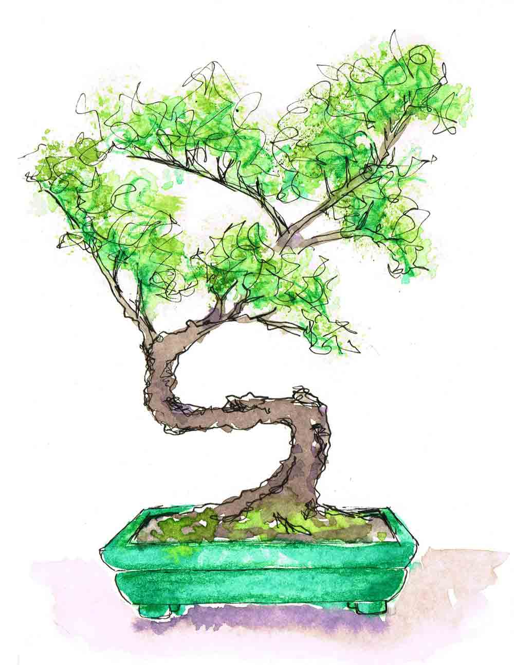 Bonsai-Pot-Plants-in-pots-no-6-kw.jpg