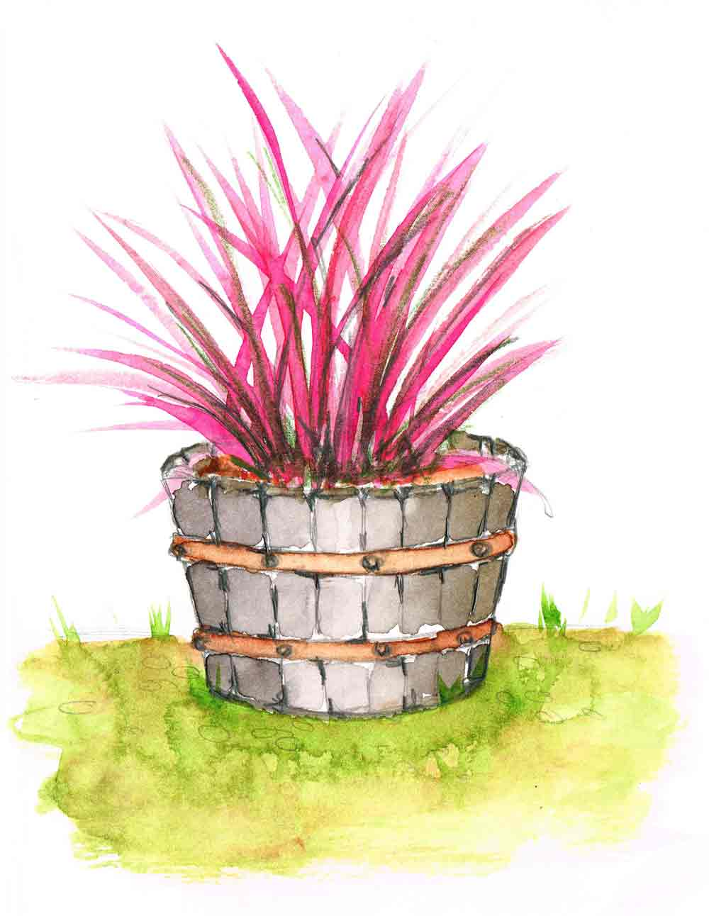Electric-Pink-Plant-in-pots-no-2-kw.jpg