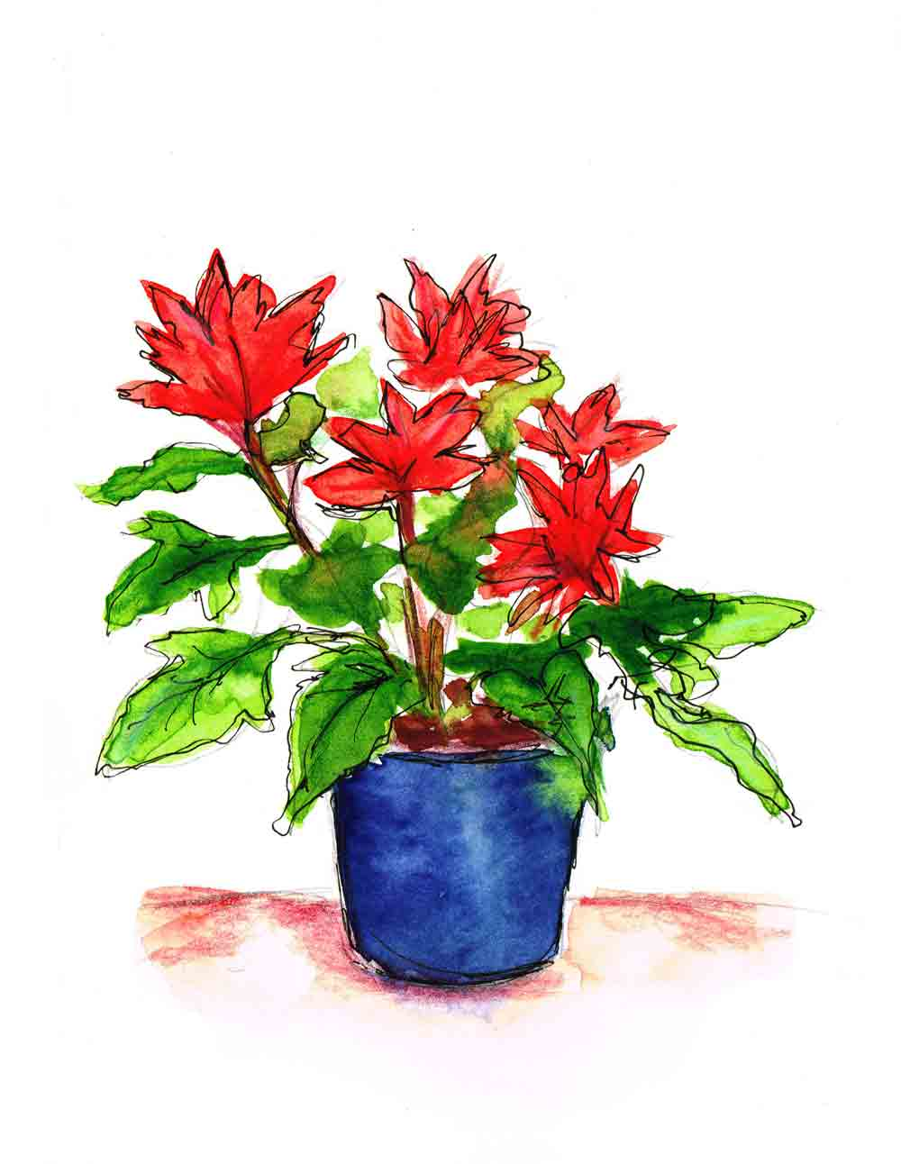 Poinsettia-Pot-Plants-in-pots-no-5-kw.jpg
