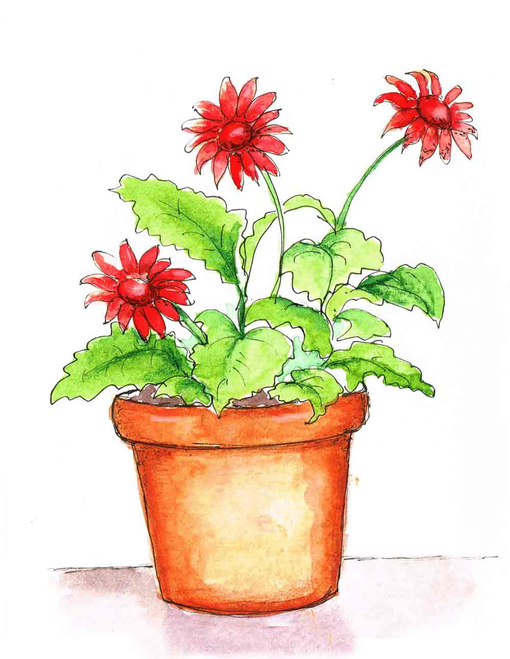 Red-Delight-Plant-in-pots-no-1-kw.jpg