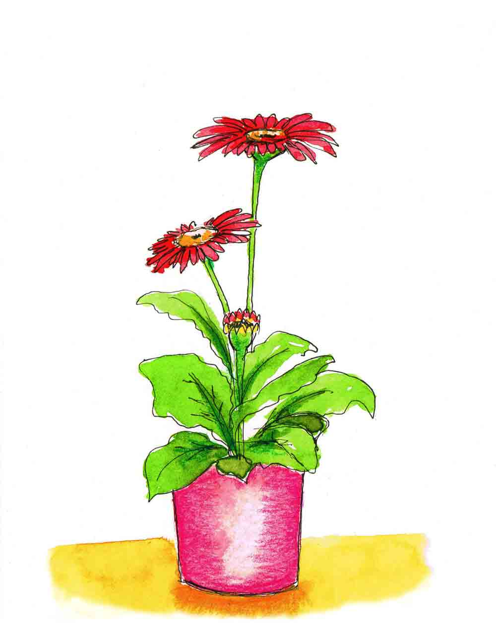Red-Gerbera-Pot-Plants-in-pots-no-7-kw.jpg