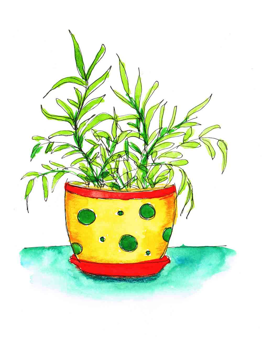 Spotty-Pot-Plants-in-pots-no-8-kw.jpg