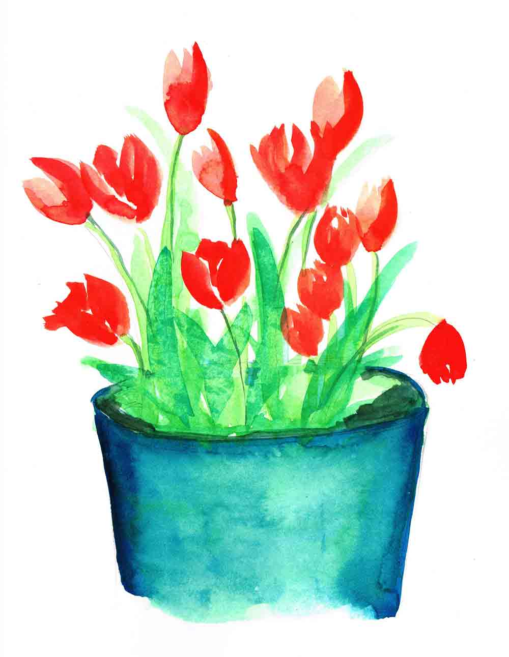 Tulips-Pot-Plants-in-pots-no-15-kw.jpg