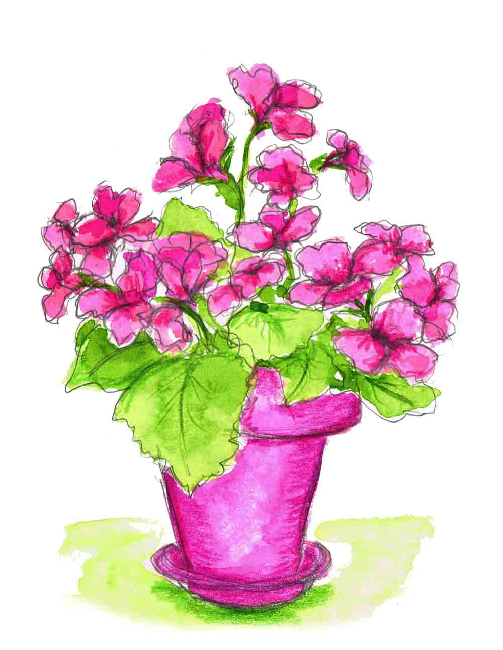 Plants in pots no 14
