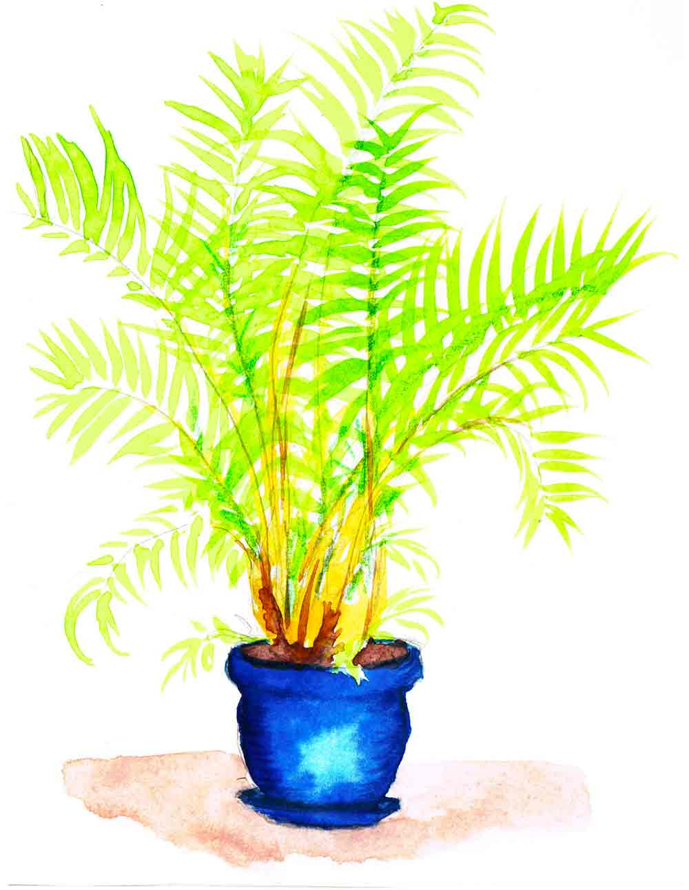 Plants in pots no 9