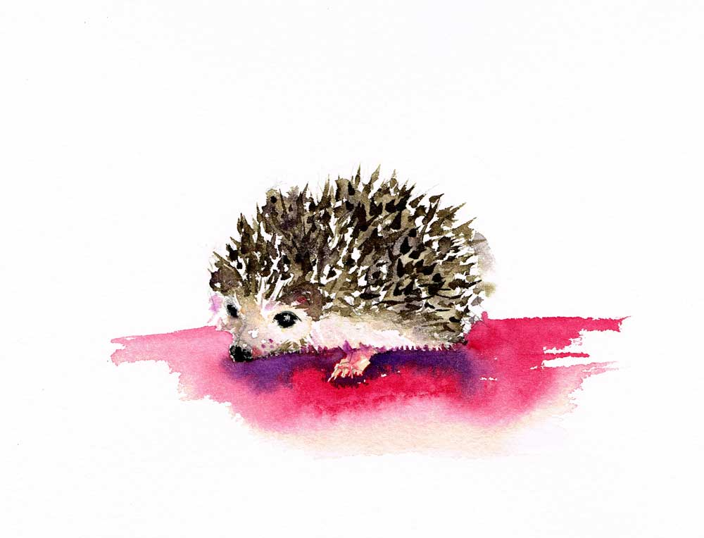 Little-critters-no-2-Hedgehog-kw.jpg