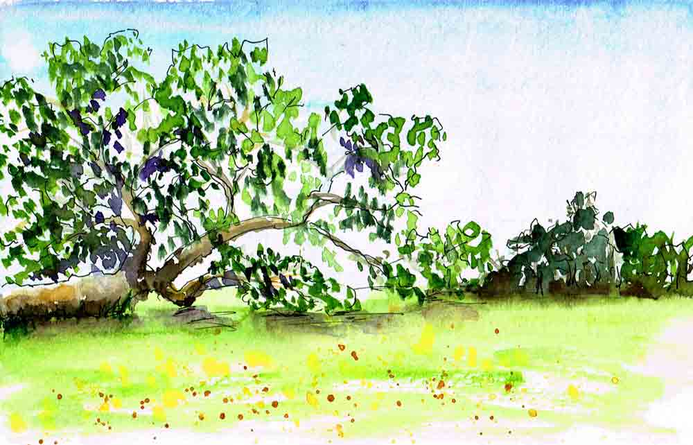 Sketchbook-getaway-no--5-big-tree-kw.jpg