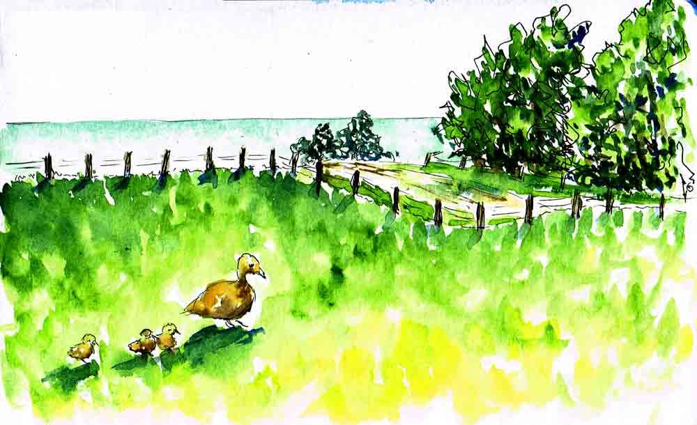 Sketchbook-getaway-no-3-mother-duck-kw.jpg