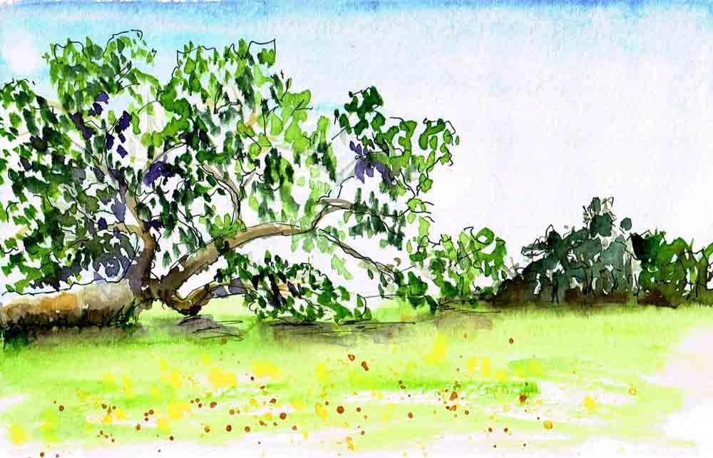 Sketchbook-getaway-no--5-big-tree-kw.jpg