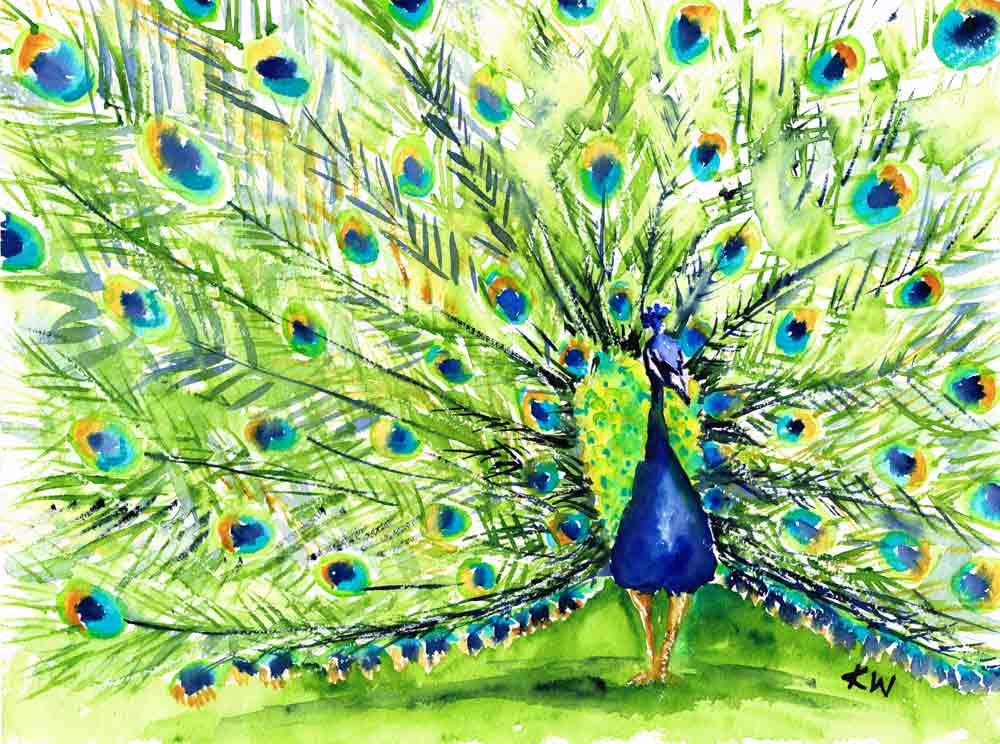 "Dramatic Birds no 2 - Peacock (Watercolour on paper, 9""x12"")"