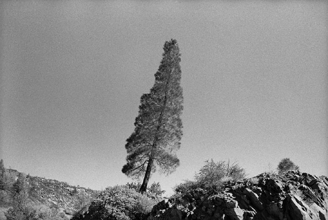 Shannon Ebner, Leaning Tree, 2002