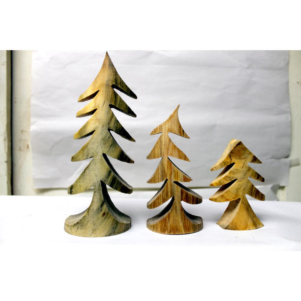 Torrey Pine Trees Plain