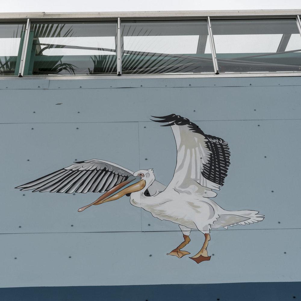 pelican.8.jpg