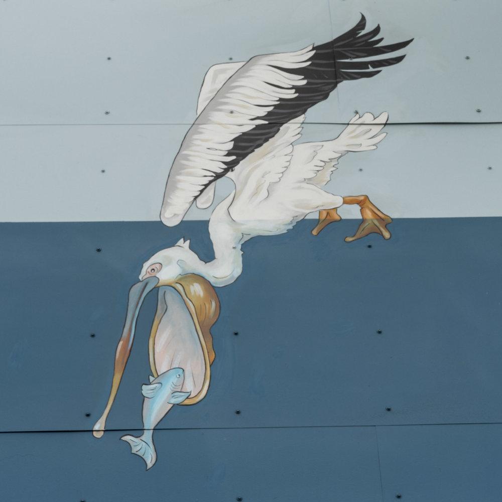 pelican.9.jpg