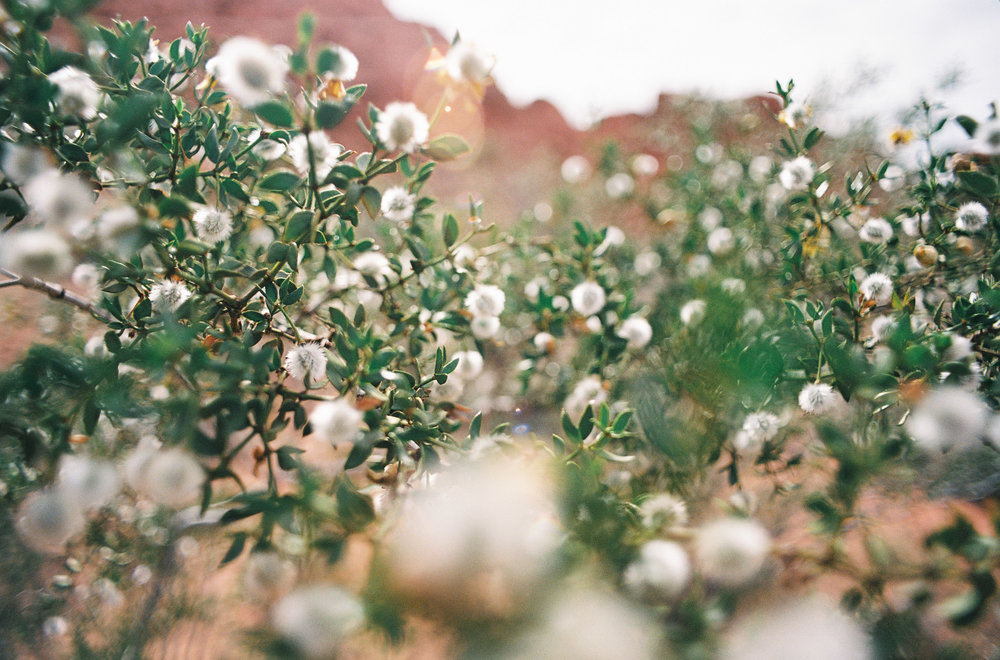 photographylandscapeusamorganeerpicum7