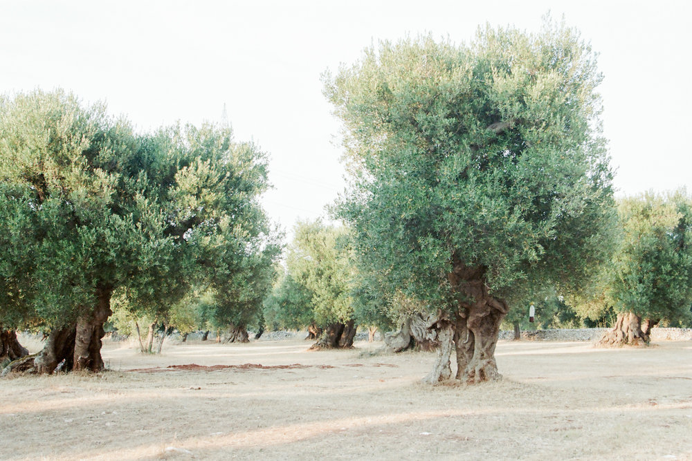 SUITCASE|TRAVEL STORY  Puglia: European Exoticism  15.03.18