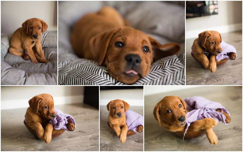 Amazing Day Photography - Puppy Newborn Session - Lifestyle Newborn Session - Dog Photographer (1).jpg