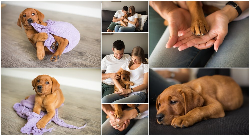 Amazing Day Photography - Puppy Newborn Session - Lifestyle Newborn Session - Dog Photographer (3).jpg