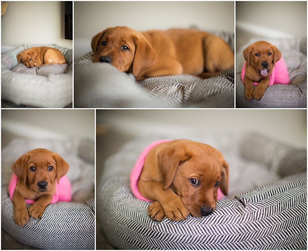 Amazing Day Photography - Puppy Newborn Session - Lifestyle Newborn Session - Dog Photographer (7).jpg