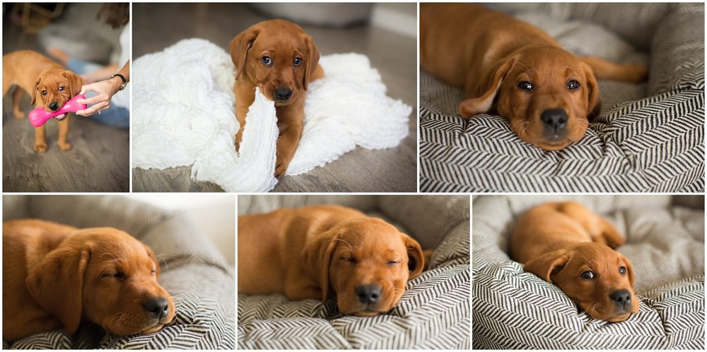 Amazing Day Photography - Puppy Newborn Session - Lifestyle Newborn Session - Dog Photographer (9).jpg