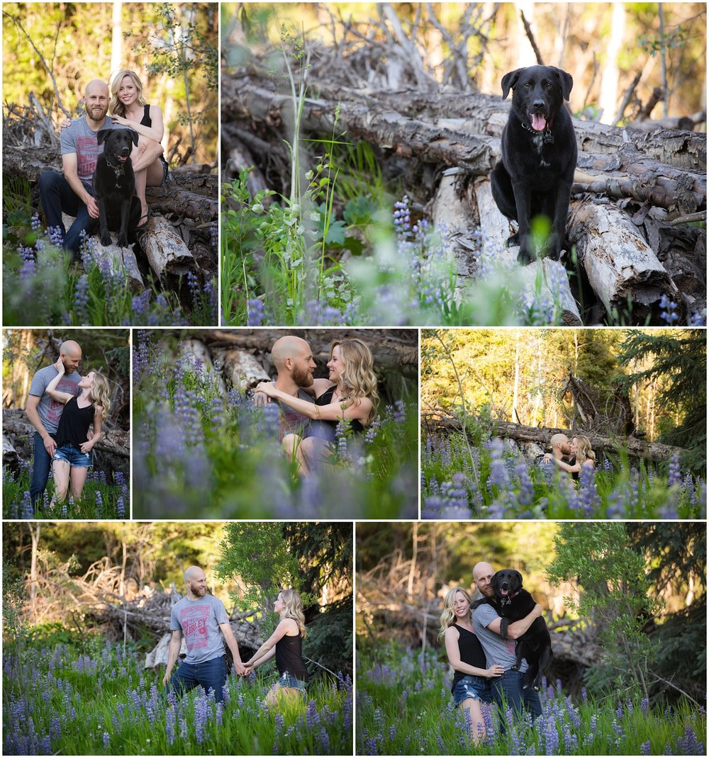 Amazing Day Photography - Cariboo Family Session - Doggy Session - Lac Des Roches Family Session (5).jpg