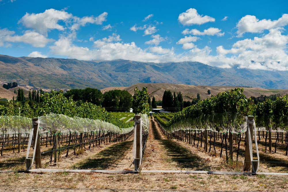 The Wild Beauty of Central Otago in New Zealand