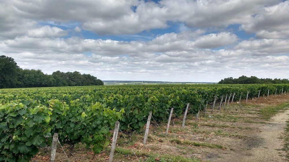 Thierry Delaunay's Sauvignon Blanc Vineyards