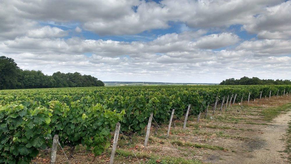 Thierry Delaunay's Sauvignon Blanc Vineyards