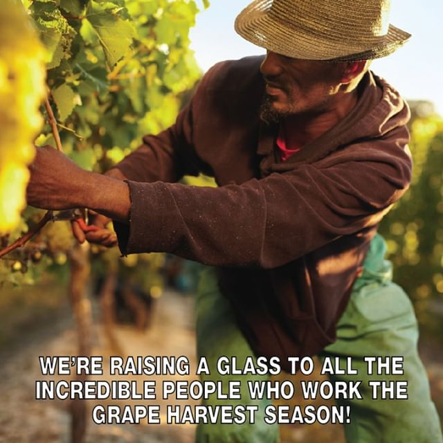 Agricultural work is impossibly difficult and great wine only comes from fantastic fruit. A thank you to all who are involved in the process!⠀⠀⠀⠀⠀⠀⠀⠀⠀ .⠀⠀⠀⠀⠀⠀⠀⠀⠀ .⠀⠀⠀⠀⠀⠀⠀⠀⠀ .⠀⠀⠀⠀⠀⠀⠀⠀⠀ #farm #grapes #season #fall #work #wtso #winestilsoldout #wine #winelover #winelife #wineonline