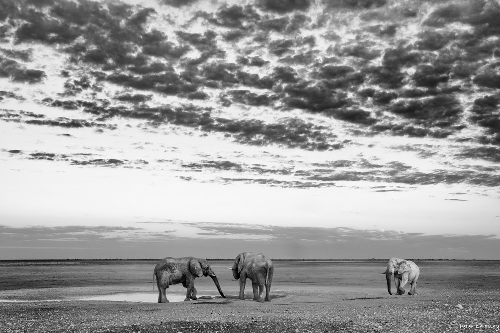 Trinity of Elephants with Clouds, Large Wildlife Prints