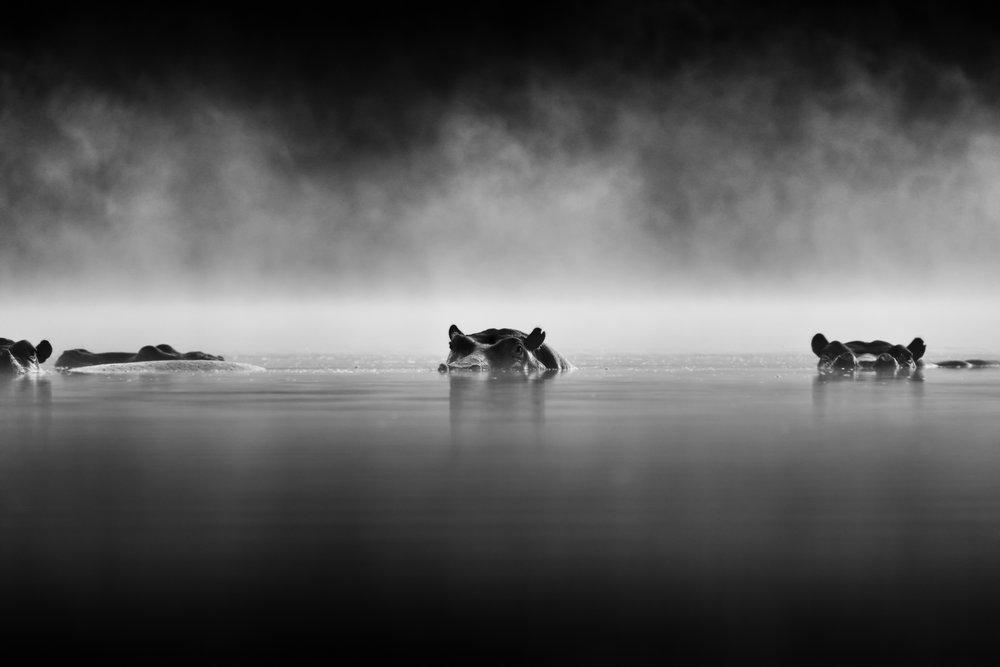 Photo Safari Tour, Hippos in the Mist