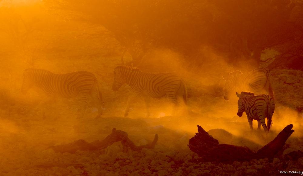 Botswana Photo Tour, Zebras on Fire