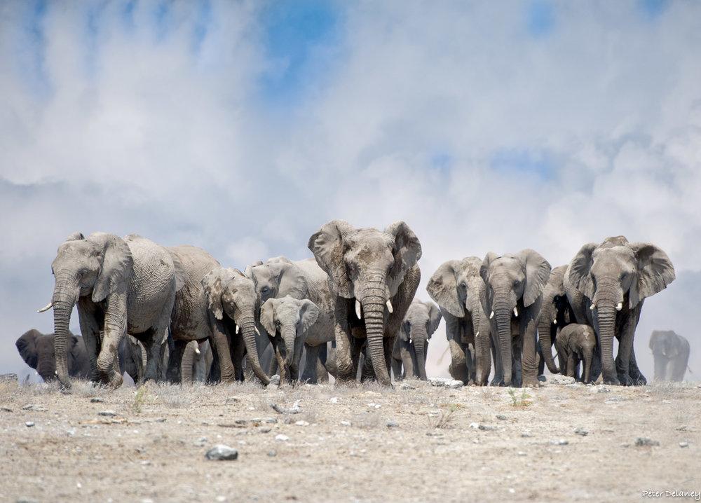 Photo Safari Tour, Elephant Ridge