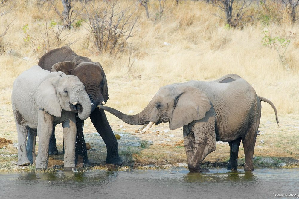 Photo Safari Tour, Elephants on River Bank